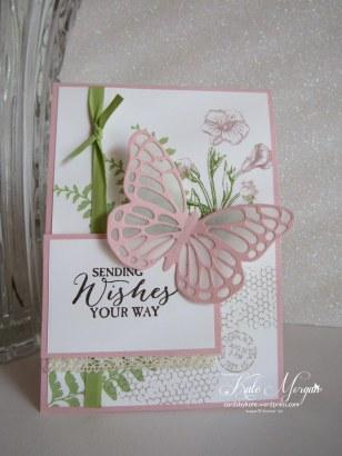 Butterfly Basics