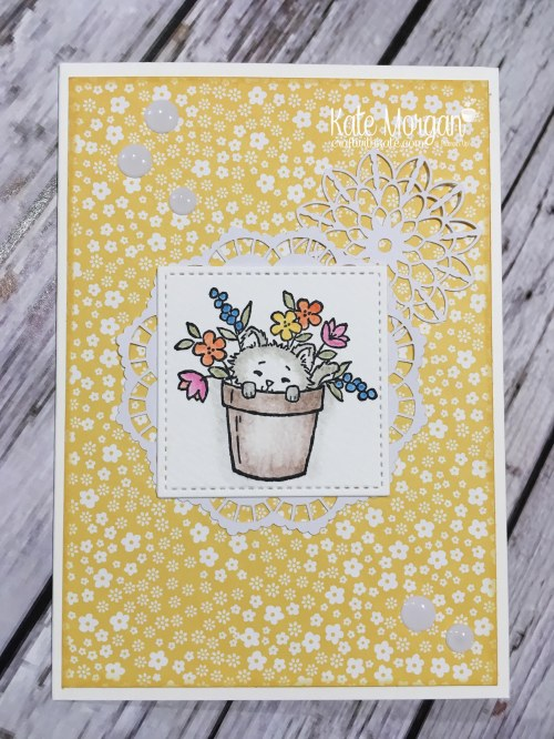 Pretty Kitty by Kate Morgan, Independent Stampin Up demonstrator, Australia